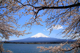 Mt.Fuji and cherry blossom