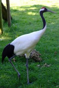 a crane 2