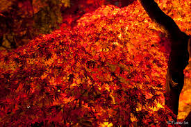 Kyoto autumn color of leaves
